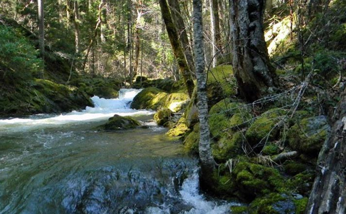 Middle Fork by Pam Sewell