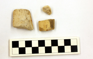A small sample of the cuttlefish bones recovered from the Jacksonville Chinese Quarter site.