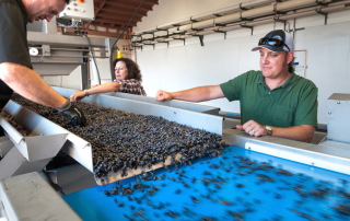 Scott Pons, harvest intern, COO Laura Naumes, and winemaker Chris Graves.